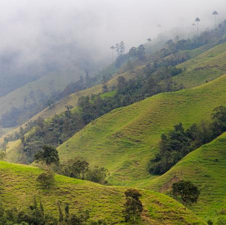 Chicchi di caffè monorigine della Colombia