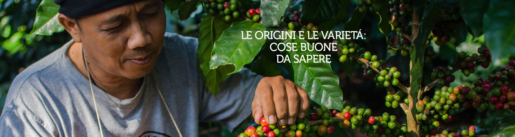 che cos'è il caffè